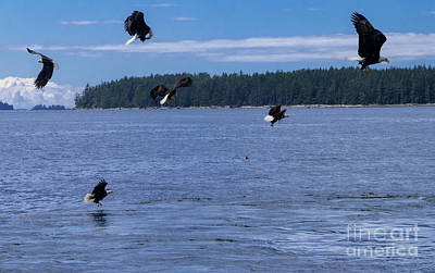 Photograph - Eagle Frenzy I by Louise Magno