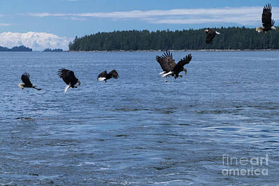 Photograph - Eagle Frenzy IIi by Louise Magno