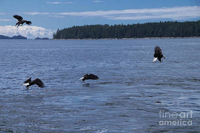Photograph - Eagle Frenzy Iv by Louise Magno