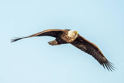 Bif Photograph - Eagle Front View by Paul Freidlund