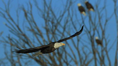 Photograph - Eagle Gang by Coby Cooper