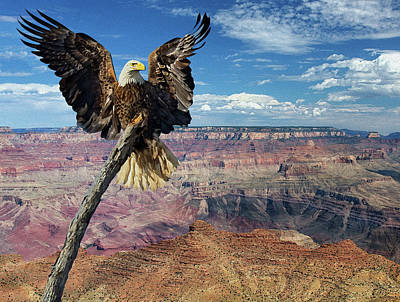 Photograph - Eagle Grand View by Art Cole