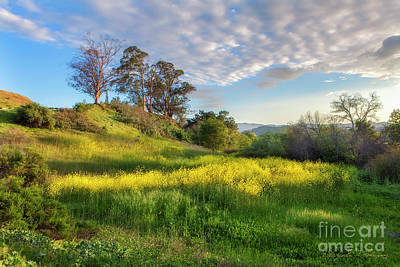 Photograph - Eagle Grove At Lake Casitas In Ventura County, California by John A Rodriguez
