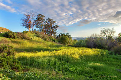 Eagle Grove At Lake Casitas In Ventura County, California Art Print