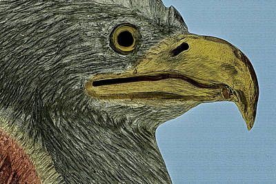 Photograph - Eagle Head #2 by Phil Cardamone