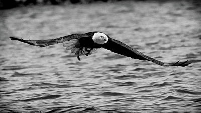 Photograph - Eagle Head On Blw 16x9 by Coby Cooper