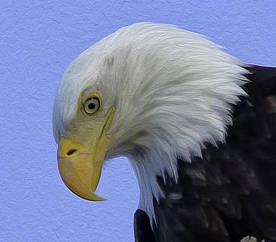 Photograph - Eagle Head Paint by Sheldon Bilsker