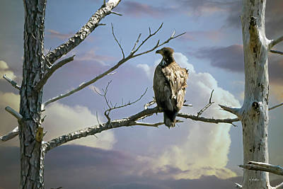 Photograph - Eagle - Hooper's Island by Brian Wallace