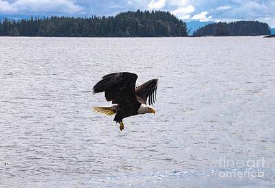 Photograph - Eagle Hunting by Louise Magno