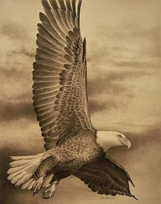Bald Eagle Pencil Drawing Drawing - Eagle In Flight 2 by Rita Niblock