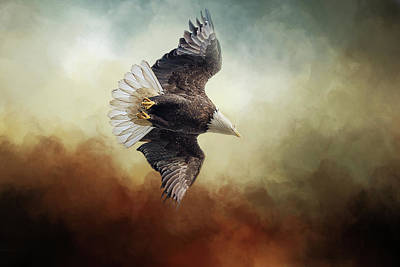 Photograph - Eagle In Flight by Michele Wright