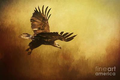Eagle In Flight Art Print by Priscilla Burgers