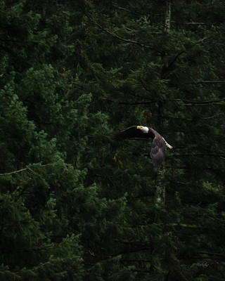 Photograph - Eagle In His Flight - Birds Of Prey Art by Jordan Blackstone