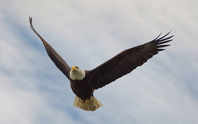 Eagle Photograph - Eagle In The Big Sky by Loree Johnson