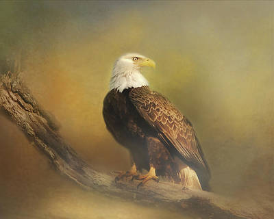 Photograph - Eagle In The Fog by TnBackroadsPhotos