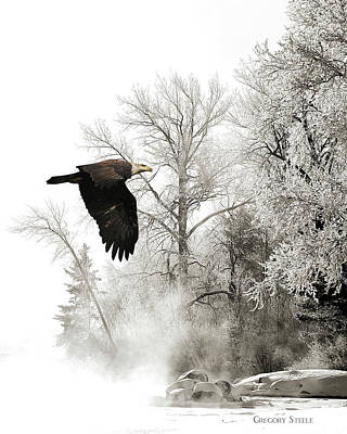 Riverstone Gallery Photograph - Eagle In The Frost by Gregory Steele