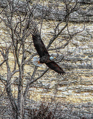 Photograph - Eagle by John Freidenberg