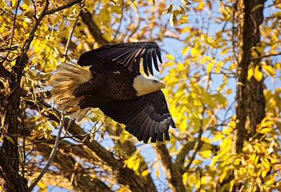 Photograph - Eagle Launch by Angel Cher