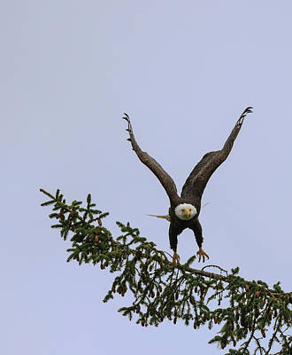 Photograph - Eagle Liftoff by Loree Johnson