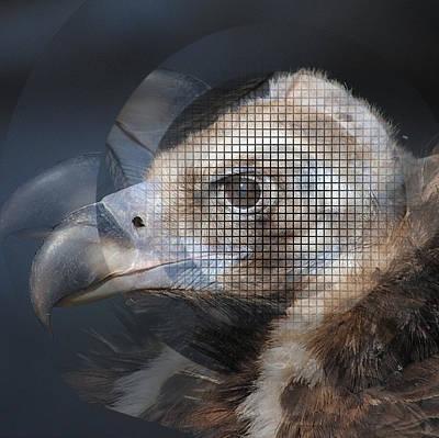 Digital Art - Eagle Lines by Yury Malkov