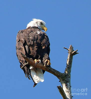 Photograph - Eagle Lookout by Gail Bridger