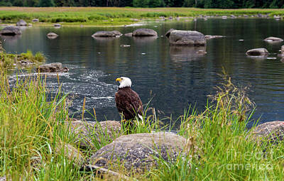 Photograph - Eagle by Louise Magno