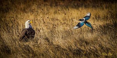 Photograph - Eagle - Magpie Confrontation  by Rikk Flohr