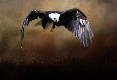 Photograph - Eagle Flying by Marilyn Wilson