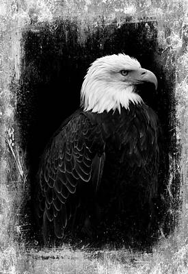 Photograph - Eagle by Martina Fagan