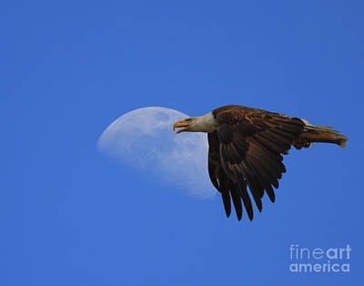 Eagle Moon Art Print by Beth Sargent