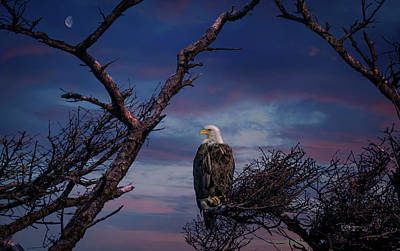 Photograph - Eagle Moon by Bill Posner