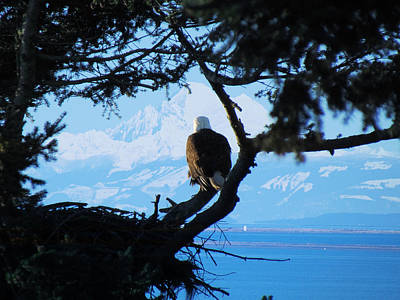 Photograph - Eagle - Mt Baker - Eagles Nest by Marie Jamieson