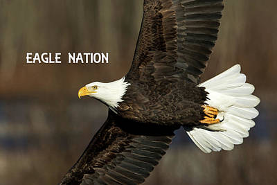 Photograph - Eagle Nation Phone Case 1 by Shari Sommerfeld