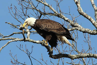 Photograph - Eagle Nest Building by TnBackroadsPhotos