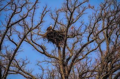 Photograph - Eagle Nest by Cornelia DeDona