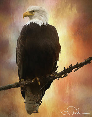 Digital Art - Eagle On A Branch by Gloria Anderson