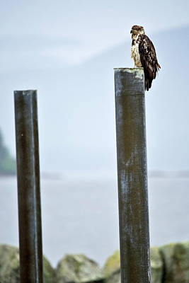 Photograph - Eagle On A Pole by Paul Riedinger