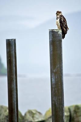 Photograph - Eagle On A Pole by Paul Riedinger