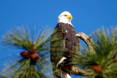 Eagle On A Sunny Day Art Print by Jeff Swan
