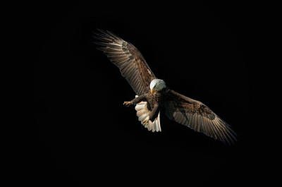 Photograph - Eagle On Black by Steve Stuller