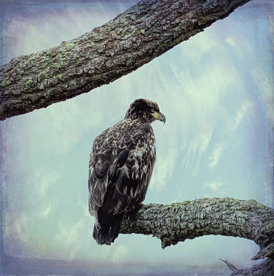 Photograph - Juvenile Bald Eagle by Marilyn Wilson