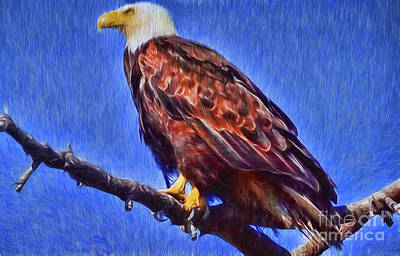 Digital Art - Eagle On Branch by Steven Parker