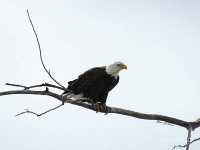 Photograph - Eagle On The Tree Branch by Yumi Johnson