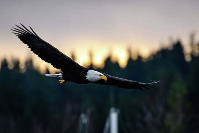 Photograph - Eagle Over The Marina by Michael McAuliffe