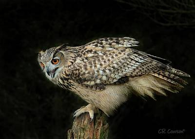 Photograph - Eagle-owl by CR Courson