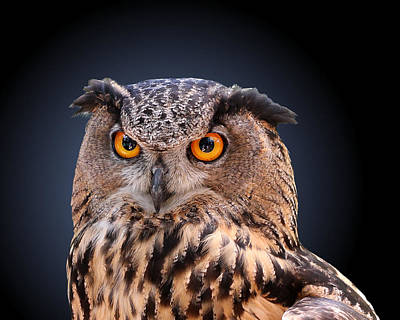 Photograph - Eagle Owl by Debi Dalio