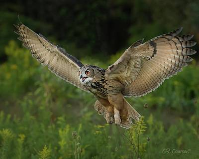 Photograph - Eagle-owl In Flight by CR Courson