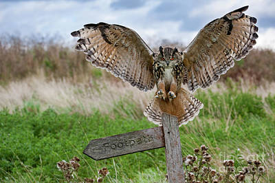 Photograph - Eagle Owl On Signpost by Arterra Picture Library