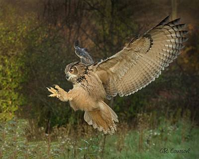 Photograph - Eagle-owl Wings Back by CR Courson