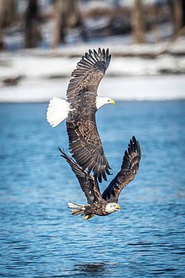 Photograph - Eagle Pair by Paul Freidlund
